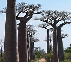 http://namadagaskare.ru/img/pages/Южные и западные сухие леса