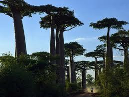 http://namadagaskare.ru/img/pages/Экспедиции на Мадагаскар